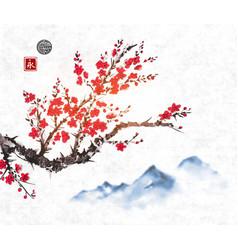 cherry sakura tree branch in blossom and far blue vector image vector image