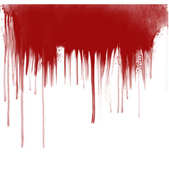 blood drips on white background vector image