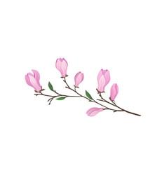 Flowering branch magnolia tree twig vector