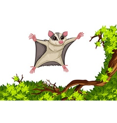 Flying squirrel flying over the tree vector