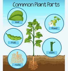 science common plant parts vector image