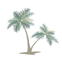 two palm trees isolated image vector image