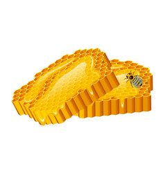 Honey set bee and hive honeycomb hive and vector