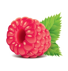 object raspberry vector image