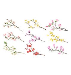 set of blooming branches of fruit trees twigs vector image