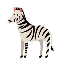 zebra wild animal vector image