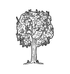 Apple tree sketch vector