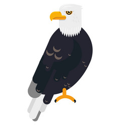 Big black eagle in the wild life flat animal vector