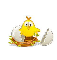 cute newborn chick in a nest twigs broken egg vector image