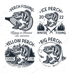 eurasian river perch fishyellow perch fishing vector image