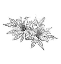 Hand drawn bunch with lily flowers vector
