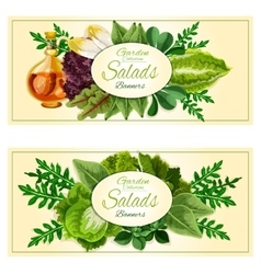 Salad greens and vegetable leaves banners set vector