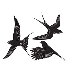 bird swallow vector image