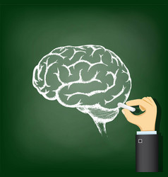 Hand drawing a chalk human brain vector