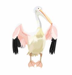 pelican cartoon bird icon on white background vector image