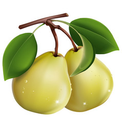 two pears on a white vector image