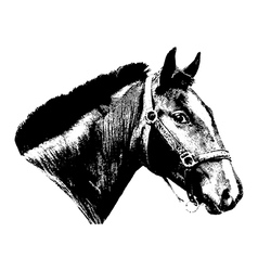 Engraved vintage horse head vector image