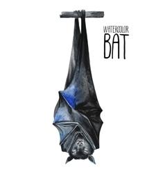 Watercolor sleeping bat vector image