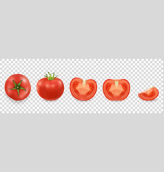 3d realistic different tomato icon set vector image