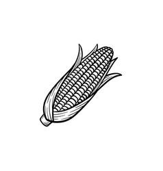 popcorn corn cob hand drawn sketch icon vector image