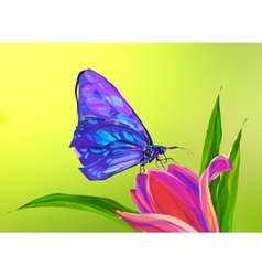 the cute colored butterfly on flower vector image