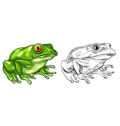 Drafting and colored picture of frog vector image