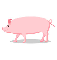 Pink pig with curly tail isolated vector