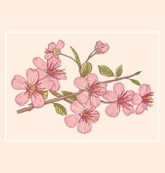 Vintage postcard with sakura vector