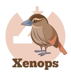 ABC Cartoon Xenops vector image