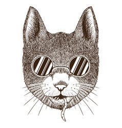 cat head with glasses vector image