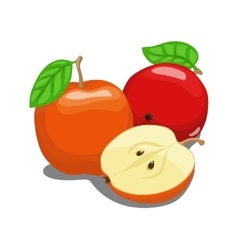 Color apple fruit vector image