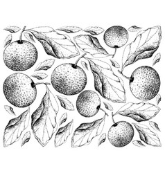 Hand drawn background of chinese pears vector