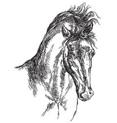Horse head hand drawing vector