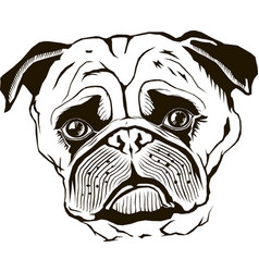 pug muzzle black isolated vector image