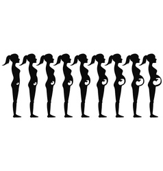 pregnancy stages Silhouette vector image vector image