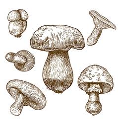 engraving mushrooms vector image