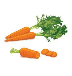carrot ripe carrot vegetable vector image