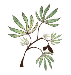 Kapok tree branch vector