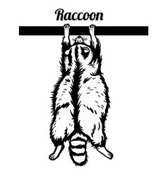 raccoon hanging on a branch - funny vector image