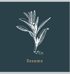 Sesame sketch drawn spice herb in vector