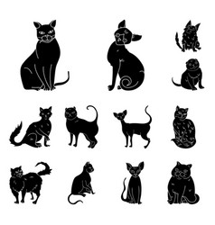 Breeds of cats black icons in set collection for vector
