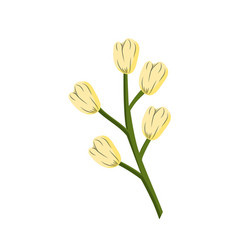 Chamomile plant ingredient to condiment of food vector