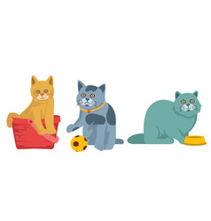 funny little cats vector image