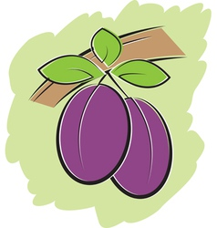 Plums on branch vector image