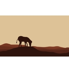 Silhouettes of zebra in hills vector image