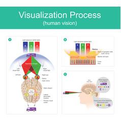 Visualization process human vision vector
