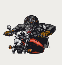 Aggressive animal biker vintage colorful concept vector