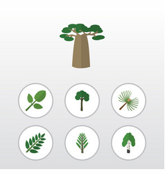 flat icon bio set of acacia leaf foliage timber vector image