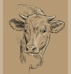 Head beauty cow drawing brown vector