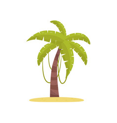 palm tree element of tropical jungle forest vector image